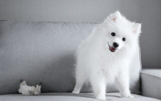 ¿Puede una comunidad de propietarios prohibir la tenencia de animales en casa?